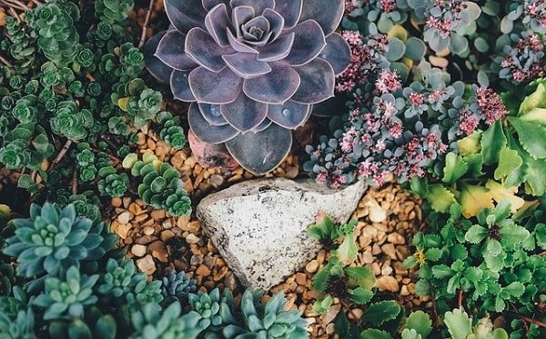 Can Succulents Grow Outside
