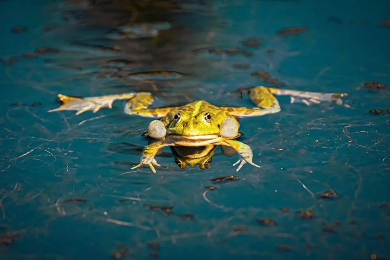 How to Get Rid of Frogs From Your Garden - The Tilth