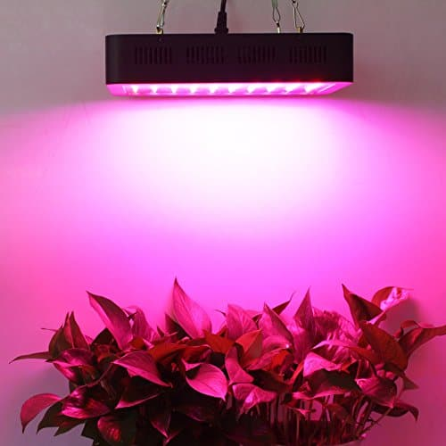 What Color Light Is Best For Plant Growth