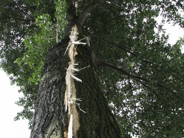 What Does a Tree Struck by Lightning Look Like