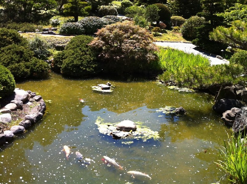 15 Best Koi Pond Ideas For Your Garden With Pictures The Tilth