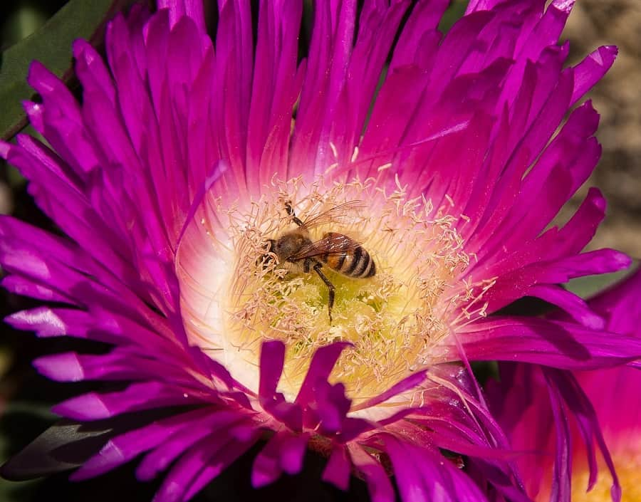 Can Flowers Survive Without Bees