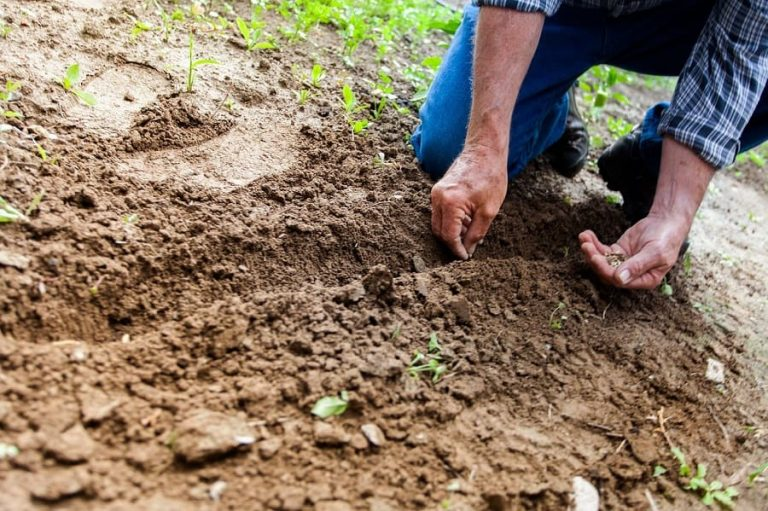 What Kind of Soil Is Best for Growing Plants